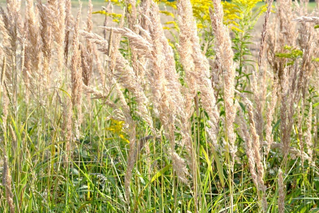 Read more about the article 5 Tipps gegen den Herbstblues